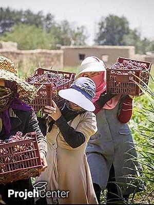 نقش زنان در اقتصاد روستا