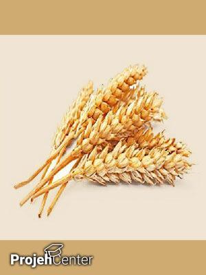 تولید اسید سیتریک از کاه گندم به روش تخمیر حالت جامد