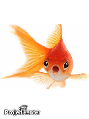 بررسی بیولوژیکی دستگاه شنوایی خط جانبی در ماهیان مختلف